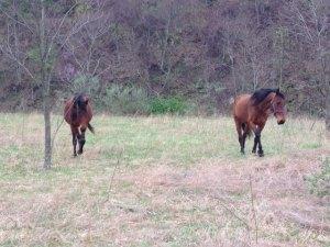 minehorses