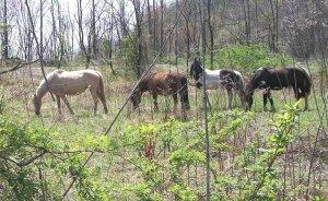 minehorses2011b