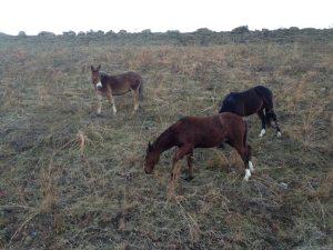 minehorses2012