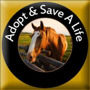 Adopt button horse edge