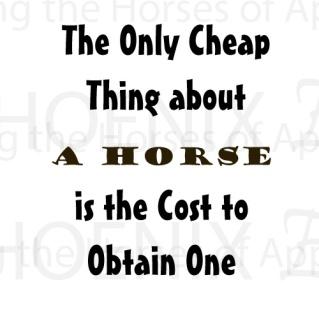 costhorse