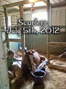 scarlettdown