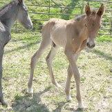 foals3