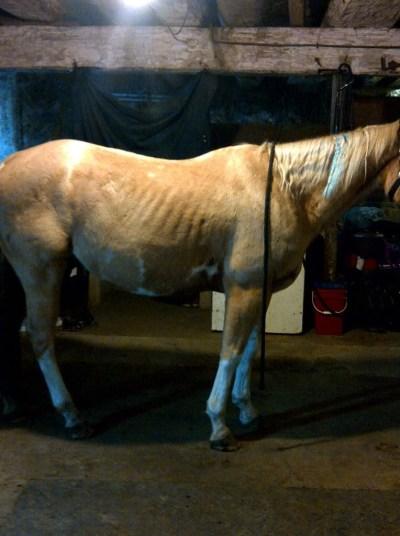 bigbellyhorse3
