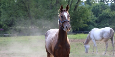 Heart of Phoenix Equine Education BLOG – More than a Rescue