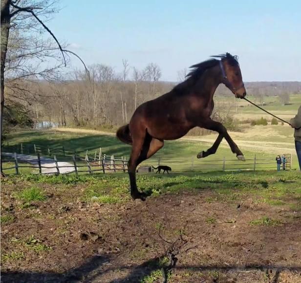 regen jumping